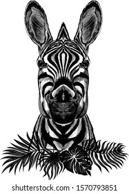 black and white Zebra with black palm leaves