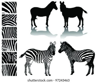Black and white zebra, silhouette, shadow and texture-vector