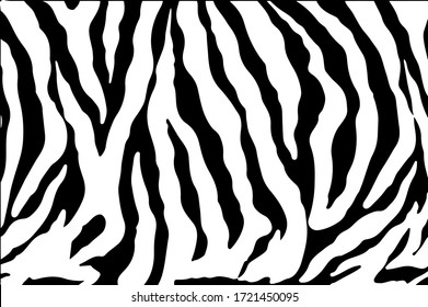 Black and white zebra stripes background. Zebra background.Vector illustration.