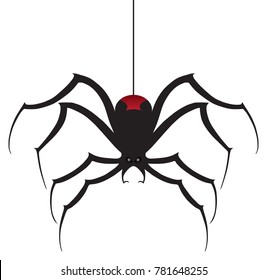 A black widow spider is dropping down using it's silk thread