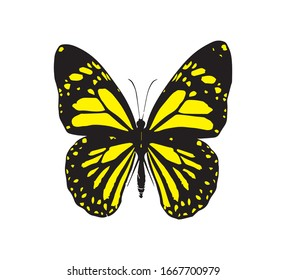 Black and Yellow Butterfly, Vector Design