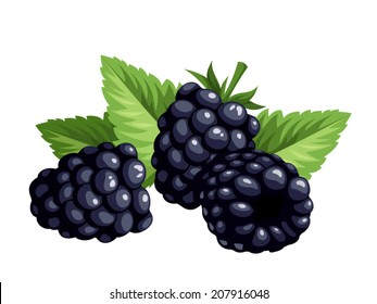 Blackberries and leaves isolated on a white background. Vector illustration.
