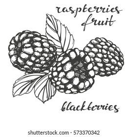 blackberries, raspberries  set hand drawn vector illustration realistic sketch