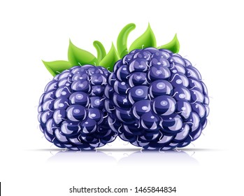 Blackberry. Fresh organic berry. Juicy ripe fruit. Vegetarian meal. Healthy food. Yummy blackberries, Isolated on white background. Eps10 vector illustration.