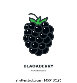 Blackberry fruit icon, outline with color fill style vector illustration