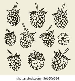 Blackberry hand drawn sketch. Vector illustration image