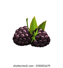 Blackberry isolated vector wild berries with green leaves on white background. Cartoon fresh bramble, healthy food, organic natural dewberry, raw production, design element
