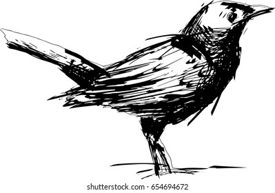 Blackbird hand drawn, black and white