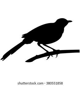 blackbird on a branch