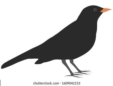 Blackbird, simple vector illustration, isolated on white background