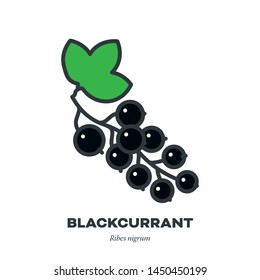 Blackcurrant berry fruit icon, outline with color fill style vector illustration