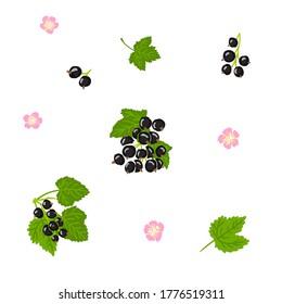 Blackcurrant vector illustration set. Blackcurrant, black currant, jostaberry, cassis, berry, fruit, flowers, leaves hand drawn illustration collection design template
