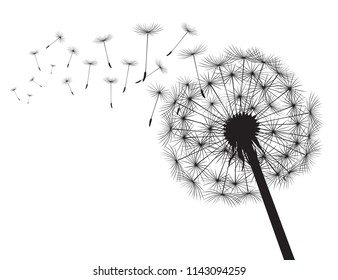 Blacksilhouette Dandelions and white background. Vector Illustration.