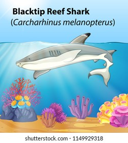 A blacktip reef shark illustration