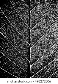Black-white closeup leaf texture. Natural stylish background. Nature vector illustration.