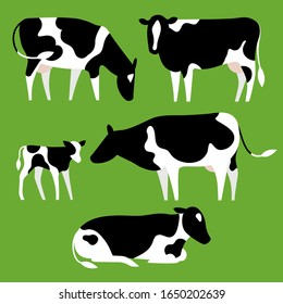 Black&white Holstein Friesian cattle set. Cows eating, grazing, standing, lying. Simple flat design style