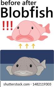 Blobfish Before After Set Vector Illustration cartoon