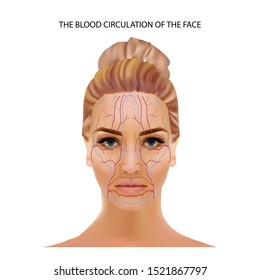 the blood circulation of the face, veins and capillaries located head person's