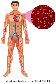Blood circulation in human body illustration