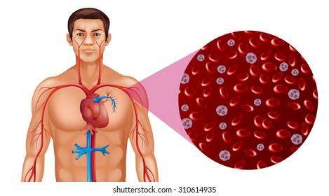 Blood circulation in human illustration