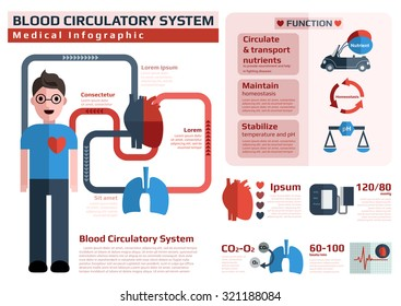 blood circulatory system/ cardiovascular system/ medical and health infographic for education, vector illustration.