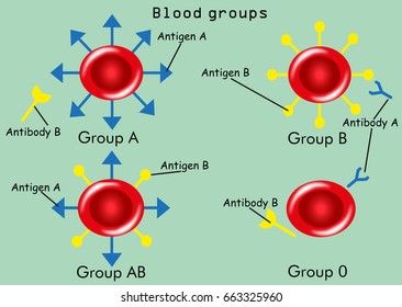 Blood groups (types) with antibodies and antigens