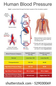 Blood pressure  is the pressure of circulating blood on the walls of vessels. When used without further specification, usually refers to the arterial pressure in systemic circulation.