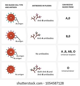 Blood types. The ABO blood group diagram