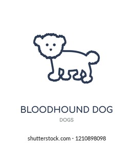 Bloodhound dog icon. Bloodhound dog linear symbol design from Dogs collection. Simple outline element vector illustration on white background.
