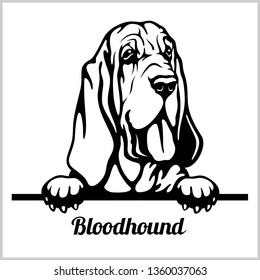Bloodhound - Peeking Dogs - breed face head isolated on white - vector stock