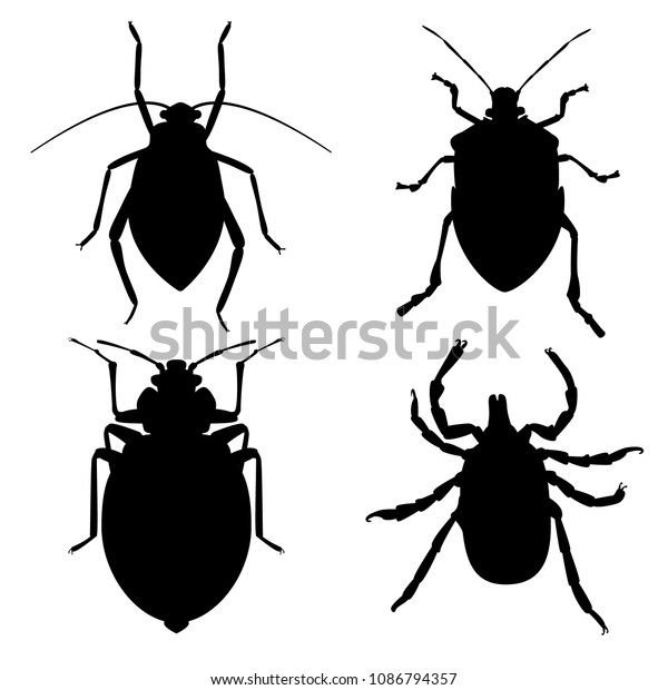 Blood-sucking parasites. Aphid, Bedbug,  Dog Flea, Mite. Vector insects