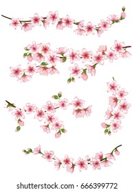 Bloom branch with pink flowers, buds illustration vector collection. Realistic design isolated on white. Blooming cherry tree twigs set, blossom collection. Apple, peach or apricot flowering branches.