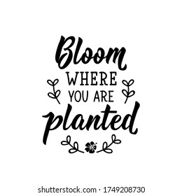 Bloom where you are planted. Lettering. Can be used for prints bags, t-shirts, posters, cards. Calligraphy vector. Ink illustration