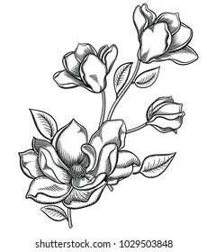 Blooming apple tree flowers,detailed hand drawn branch of apple tree blossom illustration.Vector romantic decorative flowering drawing . Objects isolated on white background.Original floral decor