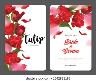 Blooming beautiful red tulip flowers background template. Vector set of blooming floral for wedding invitations, greeting card, voucher, brochures and banners design.