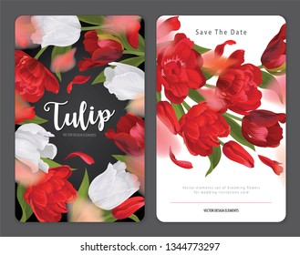 Blooming beautiful red with white tulip flowers background template. Vector set of blooming floral for wedding invitations, greeting card, voucher, brochures and banners design.