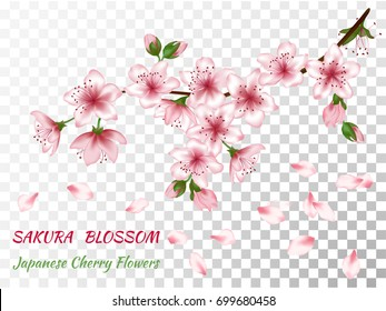 Blooming branch vector with pink spring blossom. Flowers, buds and falling petals  isolated on transparent background. Card with text place. Cherry flower blossom branch, peach bloom, sakura branch.