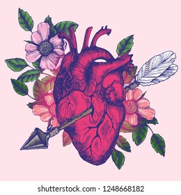 Blooming broken human heart. Hand-drawn vector symbolic  illustration with anatomical heart and cupid's arrow.