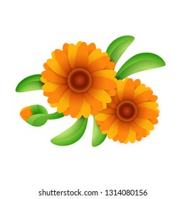 Blooming calendula flower. Orange marigold flowers with green leaves. Can be used for topics like floriculture, gardening, pharmacology, cosmetics