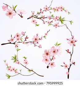 Blooming Cherry Blossom Branches Collection different shapes with buds and green leaves vector illustration