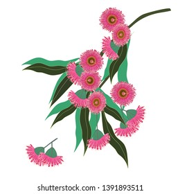 Blooming eucalyptus branch graphics gum tree flowers illustration vector isolated
