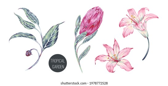 Blooming flowers, protea, lilium, leaves, flowering plants set isolated on white background. Decorative botanical flower illustration. Hand drawn elements. Floral clip art. Vector exotic print.