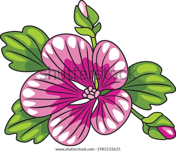 blooming-mallow-isolated-on-white-600w-1