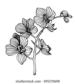 blooming orchid phalaenopsis garland branch contour ink sketch vector illustration