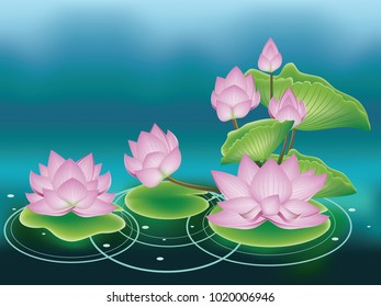 Blooming pink lotus flowers with big green leaves.