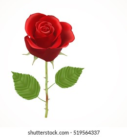 Blooming red Rose, vector, Isolated  flower, floral, plant, valentine, love, romance, wedding, dating, birthday