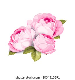 The Blooming Rose with couple of small flowers. Botanical vector illustration. Awesome single flower bouquet. Vector illustration.