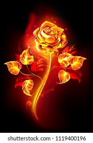 Blooming rose with  long stem and leaves from hot flame on  black background.