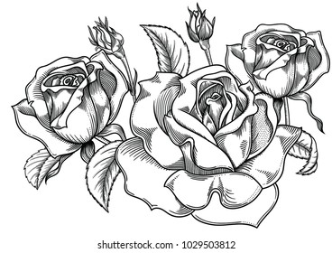 Blooming roses flowers , detailed hand drawn vector illustration. Romantic decorative flower drawing . All black and white line art rose objects isolated on white background.