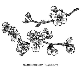 Blooming tree sketch in vector